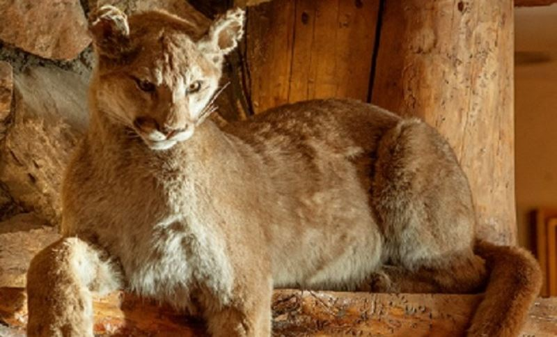 Wildlife Tours at Teton Village